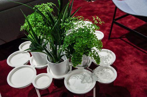 Những chậu cây xanh đẹp tuyệt giúp nhà bạn đầy sức sống - Ảnh 3
