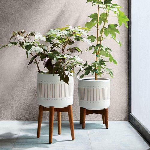 Những chậu cây xanh đẹp tuyệt giúp nhà bạn đầy sức sống - Ảnh 7