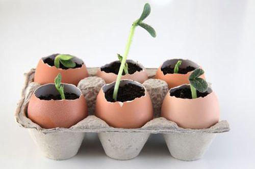 Lợi ích bất ngờ từ vỏ trứng các mẹ không nên bỏ qua - Ảnh 4