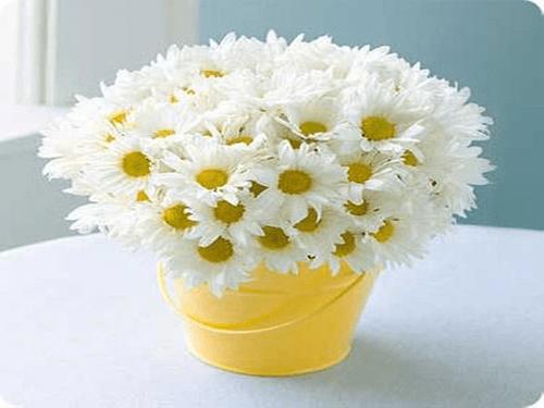 Những loại hoa mang lại may mắn cả năm - Ảnh 5