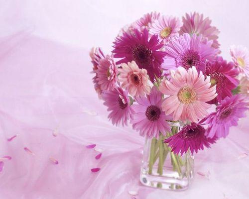 Những loại hoa mang lại may mắn cả năm - Ảnh 1