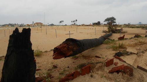 Chưa vào, bão số 11 đã đánh sập cây cối, nhà cửa - Ảnh 3