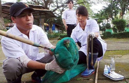Hổ mang chúa dài 3,1 mét được đút mồi... tận miệng - Ảnh 6