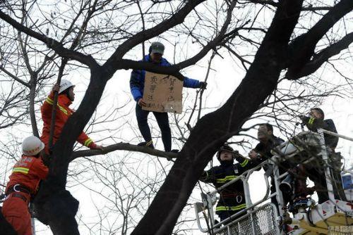 Giải cứu người đàn ông trèo lên cây rao bán thận - Ảnh 1