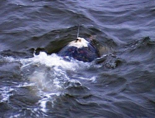 Huế: Thả rùa quý hiếm có gắn thiết bị định vị về với biển - Ảnh 3