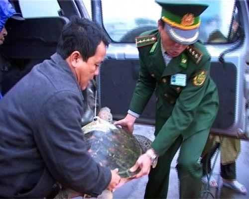 Huế: Thả rùa quý hiếm có gắn thiết bị định vị về với biển - Ảnh 2