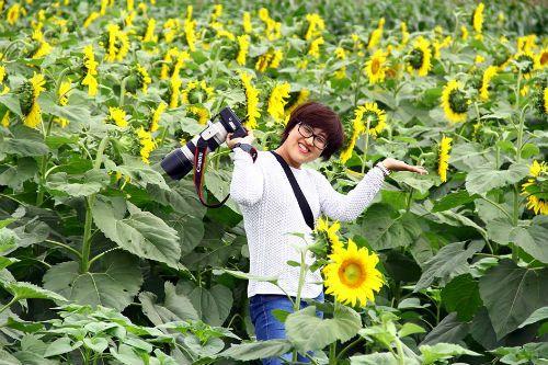 """""""Mê hoặc"""" với cánh đồng hoa hướng dương ở xứ Nghệ - Ảnh 9"""