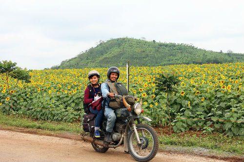 """""""Mê hoặc"""" với cánh đồng hoa hướng dương ở xứ Nghệ - Ảnh 10"""