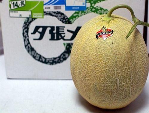 Video: Điểm mặt trái cây đắt nhất thế giới, nửa tỷ đồng/cặp - Ảnh 1