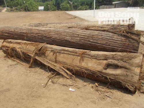 Lâm tặc xẻ thịt rừng, người dân lập chiến lũy bắt gỗ lậu - Ảnh 1