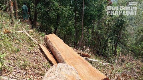 Lâm tặc xẻ thịt rừng, người dân lập chiến lũy bắt gỗ lậu - Ảnh 2
