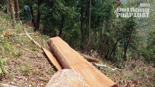 Đột kích con đường độc đạo xẻ rừng của lâm tặc tại Gia Lai - Ảnh 1