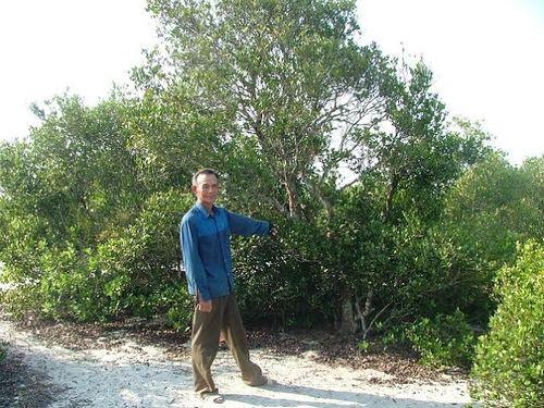 Chuyện ít biết về rừng trâm bầu 500 tuổi ở Quảng Bình - Ảnh 2