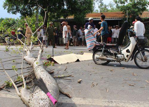 Mưa đá, lốc xoáy quét qua Hà Tĩnh, 300 ngôi nhà tốc mái, 1 người bị cây đè chết - Ảnh 2