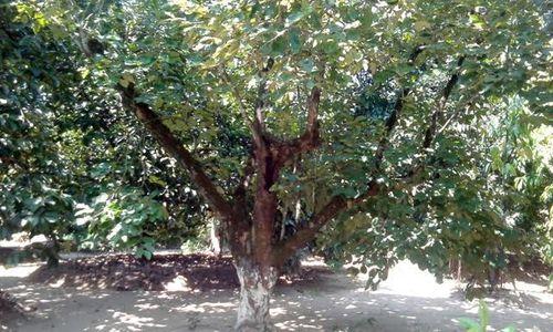 Cụ Nguyễn Du từng sinh sống ở vườn An Hiên (Thừa Thiên - Huế)? - Ảnh 2