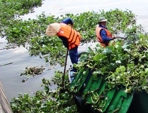 TP.HCM: Cá chết hàng loạt trên kênh Nhiêu Lộc- Thị Nghè - Ảnh 4