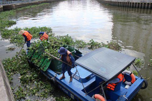 TP.HCM: Cá chết hàng loạt trên kênh Nhiêu Lộc- Thị Nghè - Ảnh 1