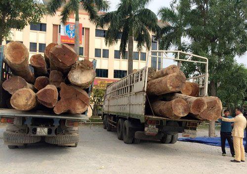 Bắt giữ 2 xe tải chở 73 tấn gỗ táu không rõ nguồn gốc - Ảnh 1