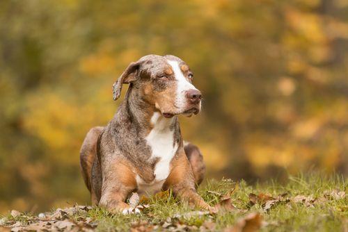 9 giống chó độc đáo mà bạn không thể bỏ qua - Ảnh 6