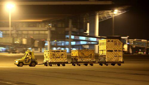 Vinamilk tiếp tục nhập bò sữa cao sản từ Úc về Việt Nam - Ảnh 6