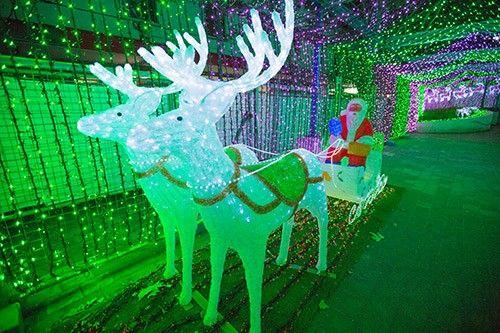 Cây thông khổng lồ, đèn kỷ lục Guinness rực rỡ Giáng sinh - Ảnh 14
