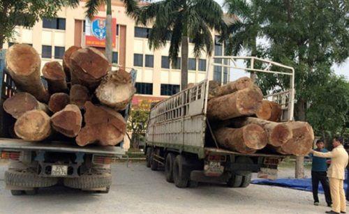 CSGT Thanh Hóa bắt giữ hai xe tải chở 73 tấn gỗ táu lậu - Ảnh 1