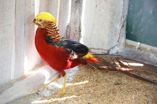 Đại gia Việt rộ thú chơi vẹt Nam Mỹ, chim quý tộc chục nghìn USD - Ảnh 2