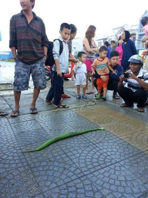 Suýt mất mạng vì đuổi theo rắn lục đuôi đỏ cắn mình - Ảnh 2