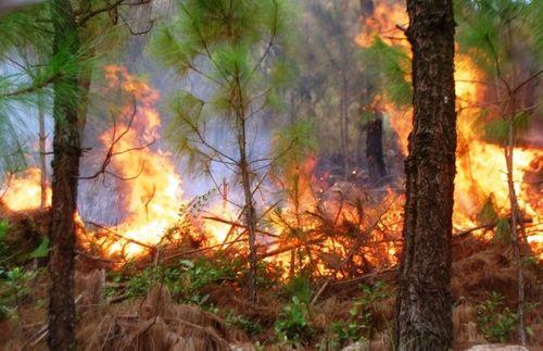 'Thần lửa' thiêu rừng,hơn 1000 người được huy động chữa cháy - Ảnh 1