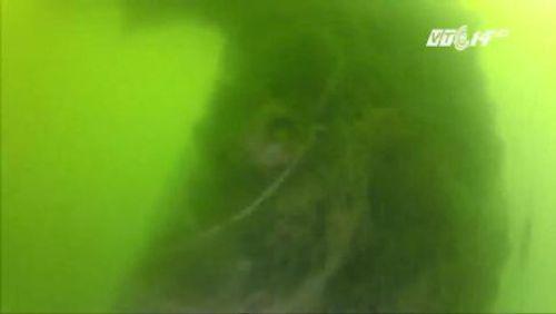 Nhìn lại toàn cảnh vụ cá chết hàng loạt ở miền Trung - Ảnh 3