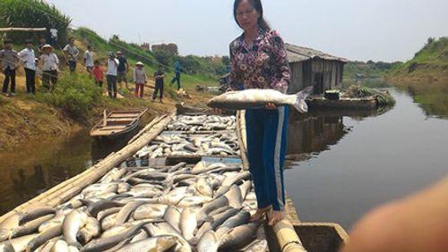 Cá chết trên sông Bưởi: Thanh Hóa đề nghị Thủ tướng Chính phủ hỗ trợ kinh phí - Ảnh 1