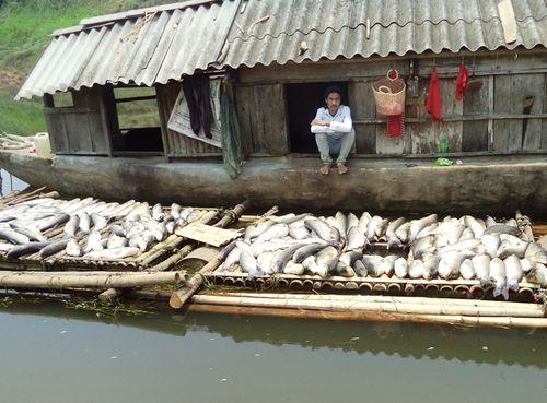 Bộ Tài nguyên và Môi trường vào cuộc vụ cá chết hàng loạt trên sông Bưởi - Ảnh 1