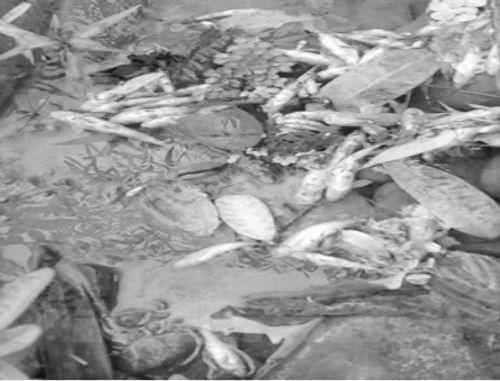 Cá chết ở thượng nguồn sông Đà: Thủ phạm là công nghệ nhập từ Trung Quốc - Ảnh 1