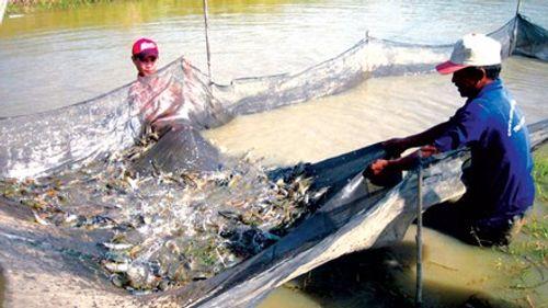 Cấp khống hơn 800 loại thức ăn thủy sản: Có thể khởi tố vụ án hình sự - Ảnh 1