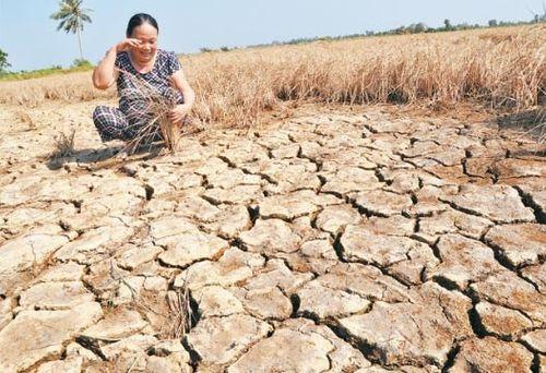 Chính phủ Mỹ viện trợ 500.000 USD cho vùng bị hạn, mặn ở Việt Nam - Ảnh 1