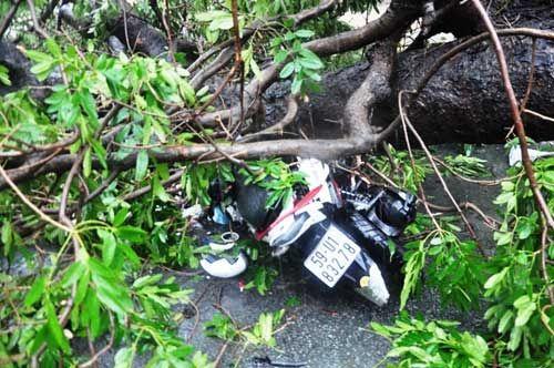 Cây bật gốc đè chết người: Đơn vị quản lý đổ lỗi do đào đường - Ảnh 2
