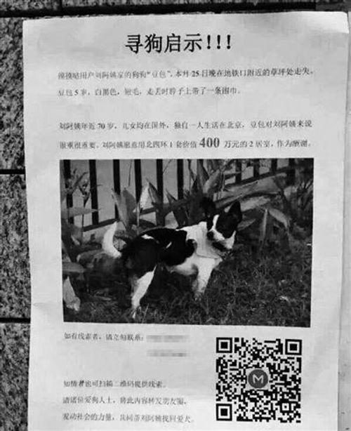 Tìm chó cưng bị lạc, hậu tạ căn nhà 13 tỉ đồng - Ảnh 1