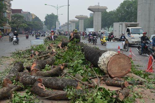 Vụ chặt cây xanh: Phó Thủ tướng yêu cầu khẩn trương thanh tra  - Ảnh 1