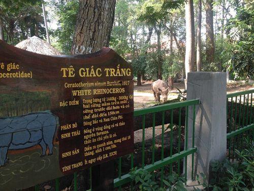 Sừng tê giác bị vạt: Công ty quản lý đổ tại... gốc cây - Ảnh 3