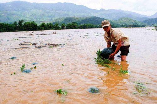 Lũ trái mùa miền Trung: Báo động lũ chồng lũ khi thủy điện xả nước - Ảnh 1