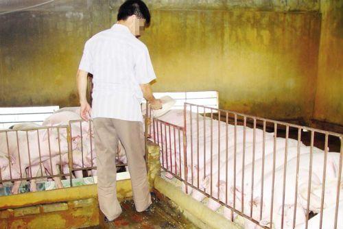 """Kinh ngạc loại """"thuốc"""" vỗ lợn mỗi tháng tăng 30-40kg - Ảnh 1"""