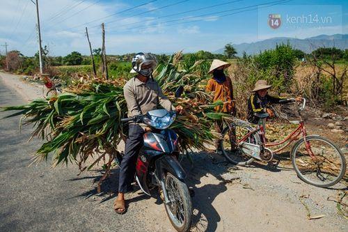 Hình ảnh khiến ai cũng xót xa về Ninh Thuận trong đợt hạn hán khốc liệt - Ảnh 12