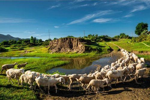 Hình ảnh khiến ai cũng xót xa về Ninh Thuận trong đợt hạn hán khốc liệt - Ảnh 3