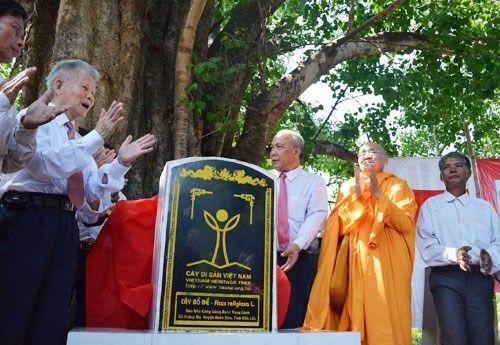 Công nhận cây bồ đề 132 tuổi là Cây di sản VN - Ảnh 1