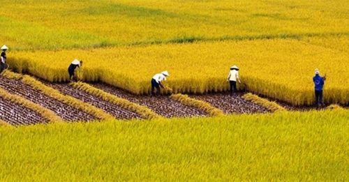 Quy định về chuyển đổi mục đích sử dụng đất trồng lúa - Ảnh 1