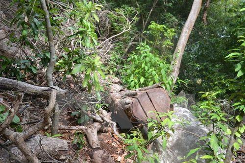 Bắt tạm giam thêm 11 đối tượng vụ phá rừng Lâm Đồng - Ảnh 1
