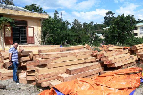 Thủ tướng yêu cầu điều tra vụ phá rừng pơ mu tại Quảng Nam - Ảnh 1