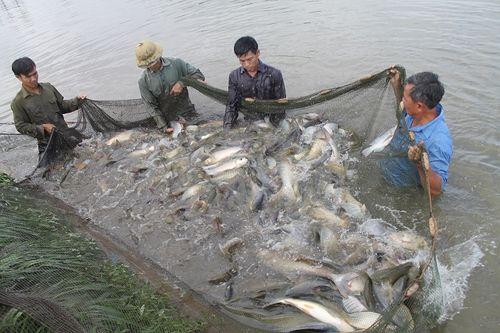Vụ cấp khống 800 sản phẩm nuôi trồng thủy sản: Vì sao chưa công bố danh sách? - Ảnh 1
