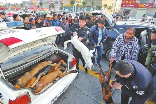 Cảnh chở xác chó lậu bằng siêu xe gây sốc - Ảnh 1