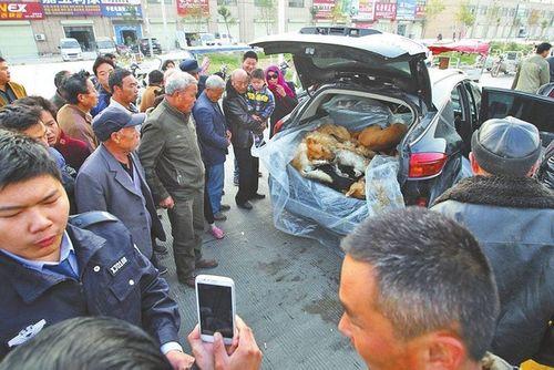 Cảnh chở xác chó lậu bằng siêu xe gây sốc - Ảnh 2
